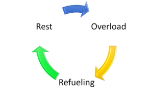 picture of the circular relationship between overload, refueling, and rest in an effective triathlon training program